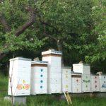 Včely v júni 2016