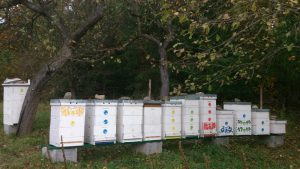 Včelnica príprava na fumigáciu 23.10.2016