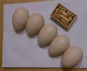 Vlaška jarabičia - prvé vajíčka