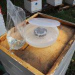 Včely v septembri 2018