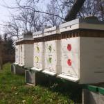 Včely v apríli 2016