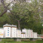 Včely v máji 2016