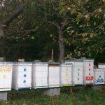 Včely v októbri, novembri 2016