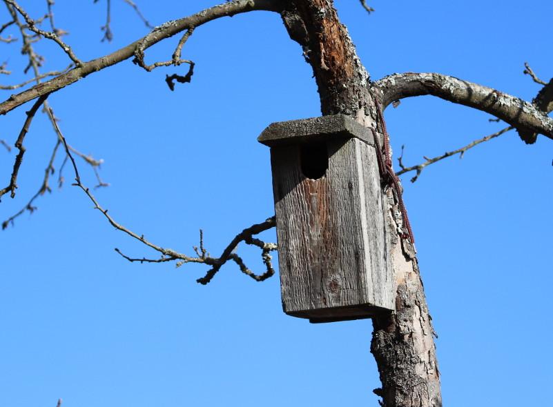 Vtáčia búdka (z2)