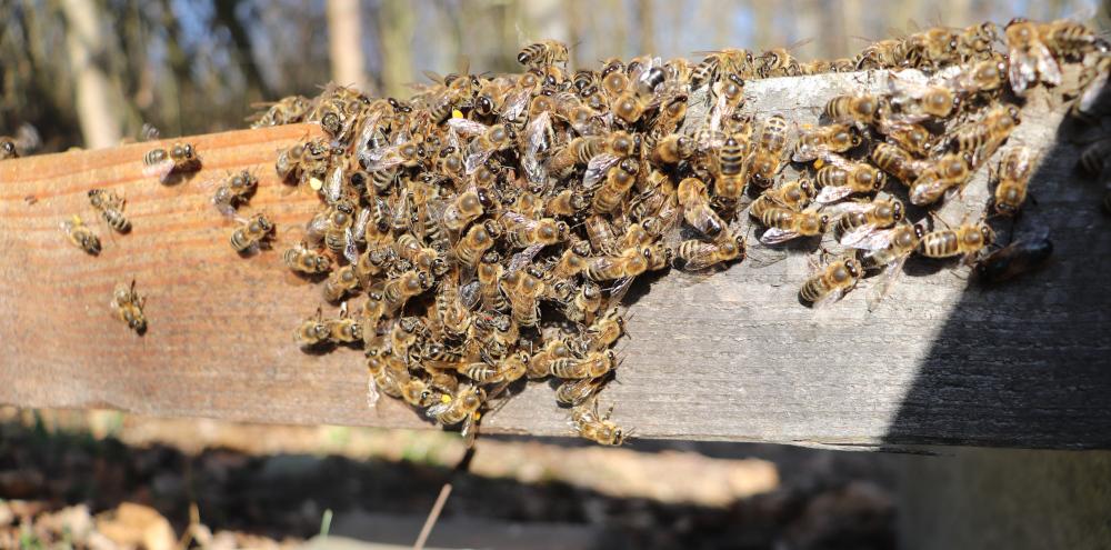 Kôpka včiel, 5.4.2020