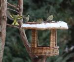 Vtáčky na kŕmidle a okolo, január 2021