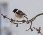 Vtáčky na jar